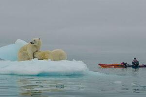 Jaime & polar bear