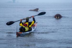 Jaime Sharp and walruses in Svalbard