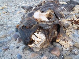 Freya Hoffmeister dead seal